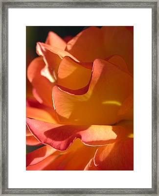 Rose Of Light Framed Print by Lucy Howard