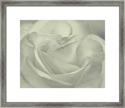 Rose Of My Heart Framed Print