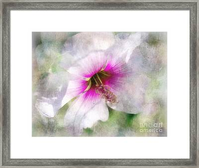 Rose Of Sharon Framed Print by Barbara Chichester