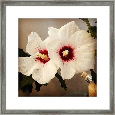 Rose Of Sharon Framed Print