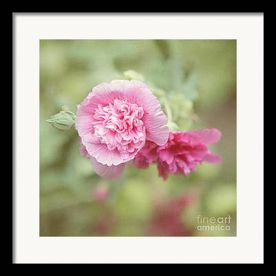 Pink Althea Framed Prints