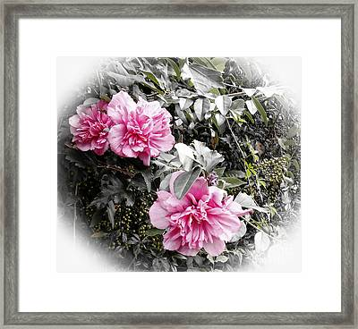 Rose Of Sharon-vintage Warmth Framed Print by Eva Thomas