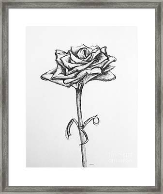 Rose Of Spring Hill Framed Print by Alyssa Rogers