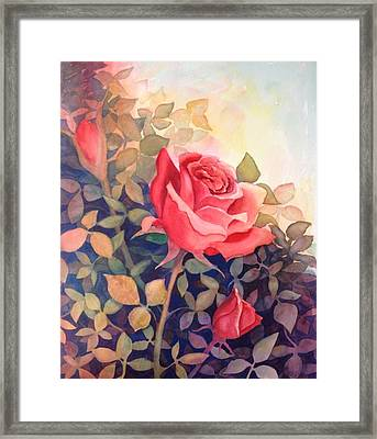 Rose On A Warm Day Framed Print by Marilyn Jacobson