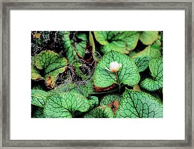 Rose On Green Beautiful Leaves Framed Print