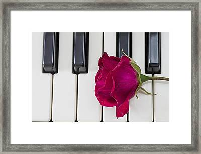 Rose Over Piano Keys Framed Print