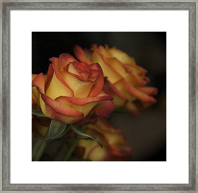 Rose Parade Framed Print