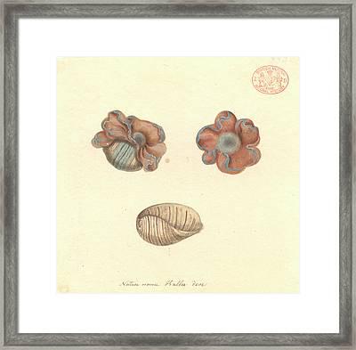 Rose-petal Bubble Shell Framed Print