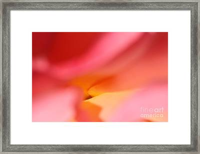 Framed Print featuring the photograph Rose Petal by Rebeka Dove