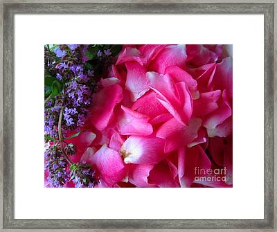 Rose Petals And Thyme Framed Print