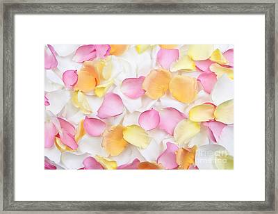 Rose Petals Background Framed Print