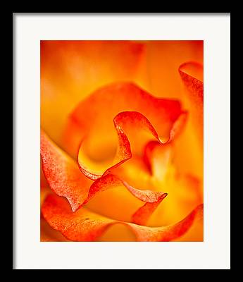 Onyonet Framed Prints