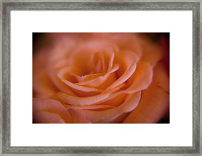 Rose Petals Framed Print by Kim Lagerhem