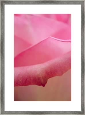 Rose Petals Framed Print by Nancy Edwards