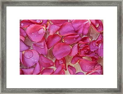 Rose Petals Framed Print