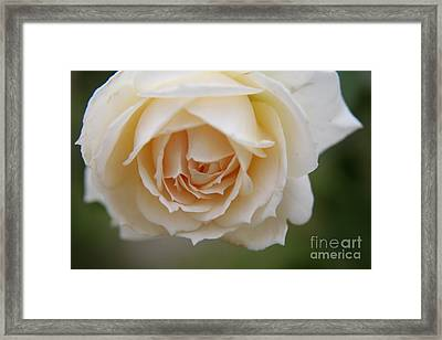 Rose... Pure And Simple  Framed Print by Lynn England