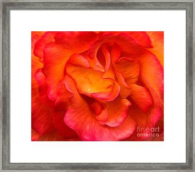 Rose Red Orange Yellow Framed Print