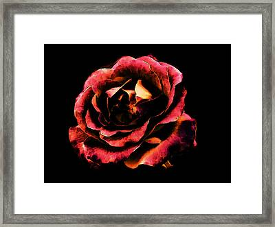 Framed Print featuring the photograph Rose Red by Persephone Artworks