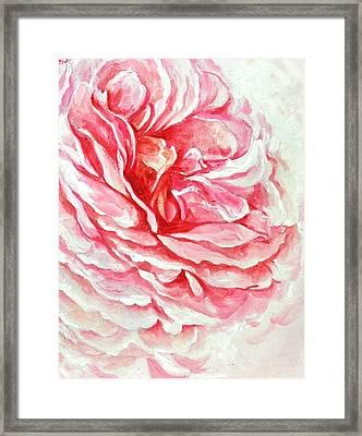 Rose Reflection 3 Framed Print by Sandra Phryce-Jones