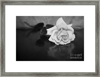 Rose Reflection Framed Print