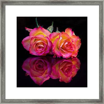 Rose Reflections Framed Print