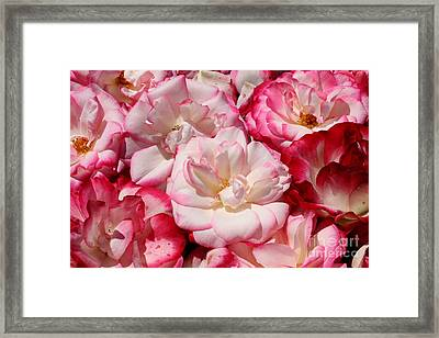 Rose River Framed Print by Jeanette French