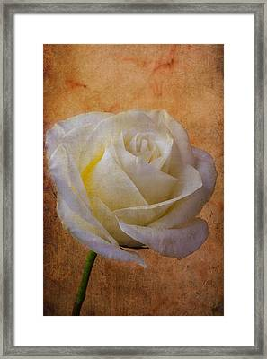 Rose Romance Framed Print by Garry Gay