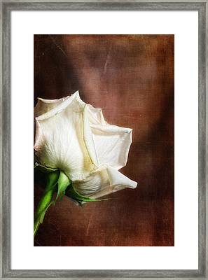 Rose - See Things Differently Framed Print