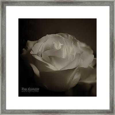 Rose Shadow And Light Framed Print
