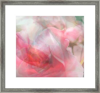 Rose Shadows Framed Print