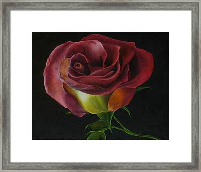 Rose Framed Print by Sherry Robinson