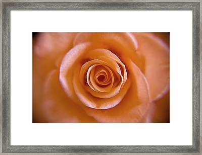 Rose Spiral 2 Framed Print by Kim Lagerhem