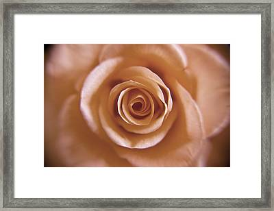 Rose Spiral 3 Framed Print by Kim Lagerhem