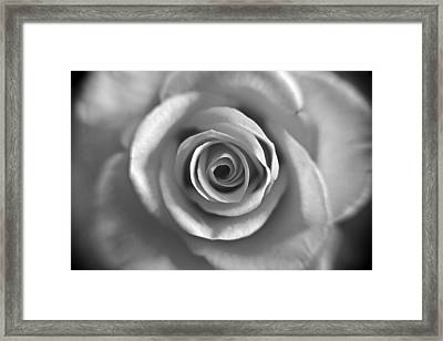 Rose Spiral 4 Framed Print by Kim Lagerhem
