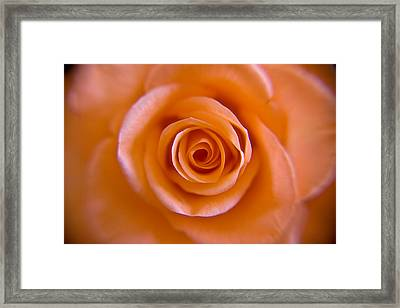 Rose Spiral Framed Print by Kim Lagerhem