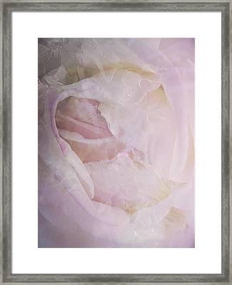 Rose Study 4 Framed Print