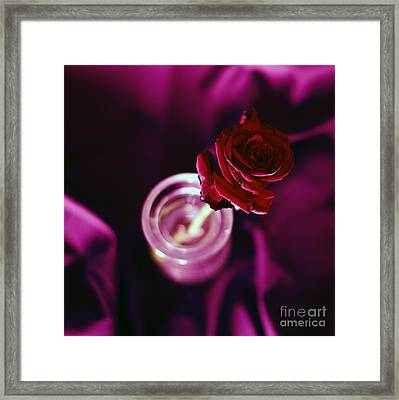 Rose Framed Print by Stelios Kleanthous