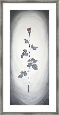 Rose Framed Print