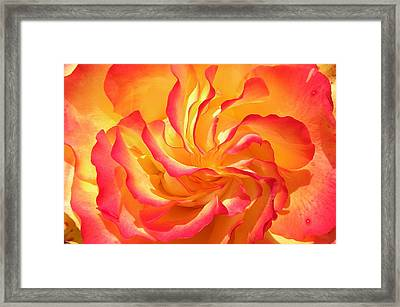 Rose Swirl Framed Print by Brian Chase