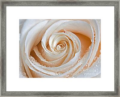 Rose Swirls And Dew Framed Print by Susan Candelario