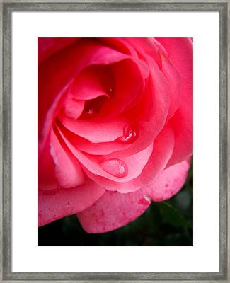 Rose Teardrop Framed Print by Dawn Romine