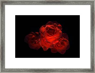 Framed Print featuring the photograph Rose Three by David Andersen