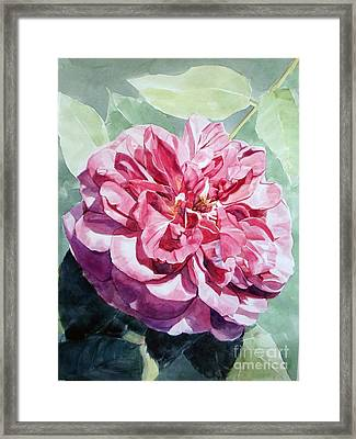 Watercolor Of A Pink Rose In Full Bloom Dedicated To Van Gogh Framed Print