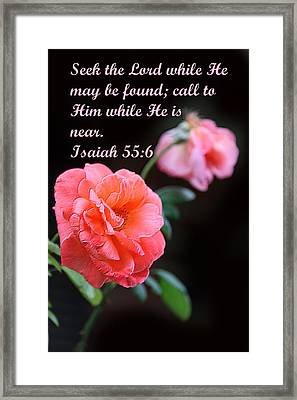 Rose With Echo Is. 55v6 Framed Print by Linda Phelps