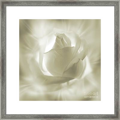 Rose With Glow Framed Print