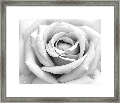 Rose With Tears Framed Print by Sabrina L Ryan