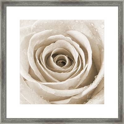 Rose With Water Droplets - Sepia Framed Print by Natalie Kinnear
