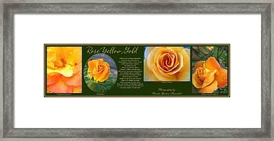 Rose Yellow Gold Plus Framed Print