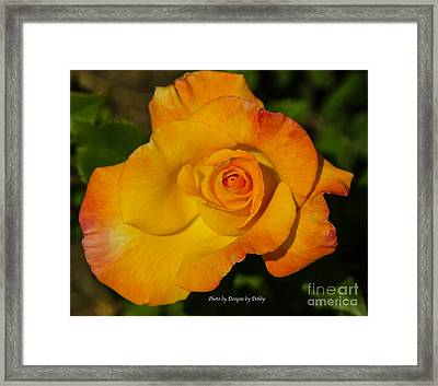 Framed Print featuring the photograph Rose Yellow Red by Debby Pueschel