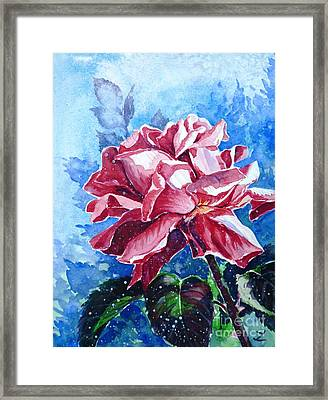 Rose Framed Print by Zaira Dzhaubaeva